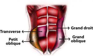 schema abdominaux